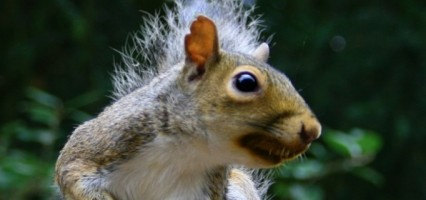 Tell us your Regent squirrel story!